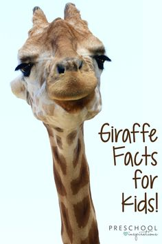 """Parents, teachers, and children gave us a """"tall"""" order when they asked for some giraffe facts for kids. Though this challenge will """"stretch"""" us a bit, you will come out """"head and shoulders above"""" those who skipped this lesson. Puns aside, enjoy these fun giraffe facts for kids! Giraffe Facts For Kids, Fun Facts About Giraffes, Animal Facts For Kids, Jungle Animals, Baby Animals, Baby Giraffes, Wild Animals, Science Experiments For Preschoolers, Preschool Science"""