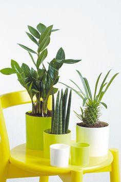 Vous ne savez pas comment associer vos plantes ? Voici une idée !