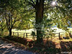 Pferdekoppel mit Holzgatter im Gegenlicht in einem idyllischen Tal bei Oerlinghausen bei Bielefeld im Teutoburger Wald in Ostwestfalen-Lippe