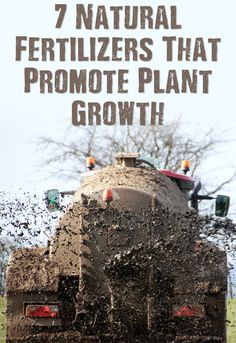 7 Natural Fertilizers That Promote Plant Growth - You have to spend a lot of money on fertilizer either, you can use left overs from your dinner to produce some of the best natural fertilizer on the planet. Organic Gardening, Gardening Tips, Backyard Farmer, Survival Prepping, Doomsday Prepping, Traditional Landscape, Lots Of Money, Plant Growth, Back Gardens