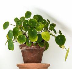 Heb jij ook moeite met het in leven houden van jouw geliefde urban jungle? Lees dan verder. Dit zijn zes makkelijk te onderhouden planten.