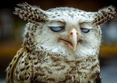 Good Morning! | Funny Pictures Site! http://fanny-pictures-site.com/good-morning/ #funny #pictures #fun #lol #humor #animal