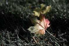 Fall Leaf Photography Autumn Leaves Wall Art by KateRyanFineArt, $45.00