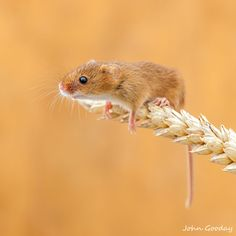 It's tough at the top by John Gooday on 500px Nature Animals, Animals And Pets, Baby Animals, Cute Animals, Strange Animals, Wildlife Nature, Beautiful Creatures, Animals Beautiful, Harvest Mouse