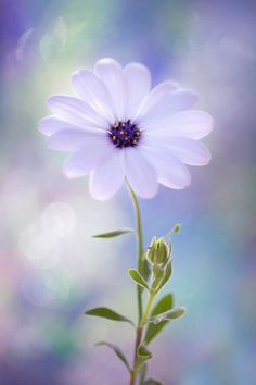~~bewitched | daisy bokeh | by Monique Felber~~