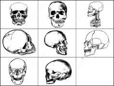 cráneo pincelgfsd