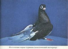 gray_turman_3_big Whale, Bird, Gray, Animals, Whales, Animales, Animaux, Birds, Grey