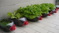 8 Vegetables You Can Grow In Your Tiny Apartment All Year Round - YouTube