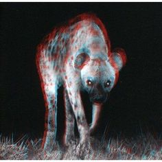 night hyena