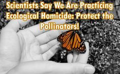 Scientists Say We Are Practicing Ecological Homicide: We Must Protect the Pollinators!
