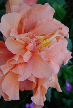 A study in Peach