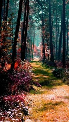 magical forest in Po beautiful amazing