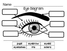 Human Eye Diagram, Diagram Of The Eye, Parts Of An Eye, Eye Structure, Human Body Science, Eye Anatomy, Kids Cuts, Human Anatomy And Physiology, Teaching The Alphabet