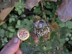 Hummingbird Eggs   b