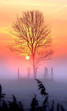 Sunrise (Zeeland, Netherlands) [photographer unknown]