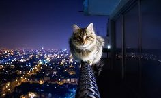 A fearless, crazy Cat sits on a very high ledge....
