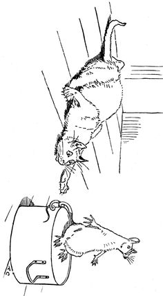 cat coloring pages 1