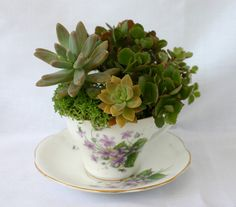 Succulents Planted in a Lavender Floral Teacup/ Potted Succulent