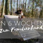 In 6 Wochen zum Familienhund – Teil 2