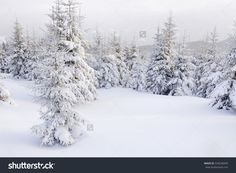 Christmas trees under heavy snow in mountains #outdoor #tree #cold #snowfall #snowy #wonderland #heavy #natural #park #white #red #seasonal #bright #holiday #freeze #xmas #christmas #sun #covered #ice #season #wood #forest #blue #winter #wilderness #spruce #weather #mountain #sky #dawn #scenic #frost #scene #beautiful #background #fresh #snow #space #branch #nature #tranquil #vacation #landscape