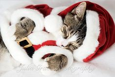 christmas animals pictures   Cute and Funny Christmas Pets. Part 2 - AmO Images - AmO Images