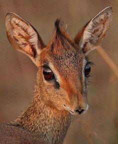 Belleza animal, mirada intensa. Tomado de FB: Carlos Oseguera Loranca