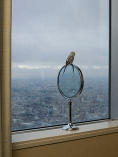 Alec Soth, Tokyo, 2015 / Magnum Photos. Zippertravel.com
