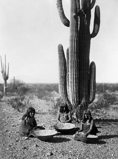 """Saguaro gatherers2 - """"Saguaro gatherers, Maricopa, Arizona"""" (1907). Three Maricopa women with baskets, seated in front of a Saguaro cacti in southern Arizona. From The North American Indian, by Edward S. Curtis.Cactus - Wikipedia, the free encyclopedia"""