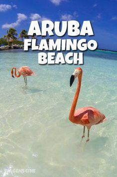 Flamingo Beach: essa praia em Aruba fica na Renaissance Island e é um dos passeios imperdíveis para se fazer em Aruba