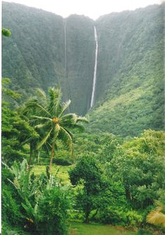 Hawaiian Walkways: Hilo, Hawaii Jungle Hiking Excursions
