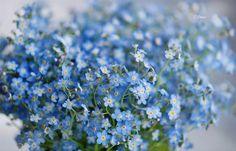 Озеленение Двора, Ландшафтный Дизайн, Цветочные Композиции, Красивые Цветы, Фрукты, Синие Цветы, Синие Ногти, Живописные Пейзажи, Дисплей