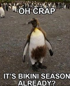 Exactly how we feel when May starts to hit! Luckily, the winter seasons are ahead! #FunnyFridays