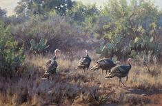 He has garnered praise for his paintings of North American wildlife and has been featured in numerous publications. Specialty in whitetail painting Wildlife Paintings, Wildlife Art, Turkey Painting, Turkey Bird, Duck Art, Grimm, Pet Birds, Giclee Print, Drawing Stuff