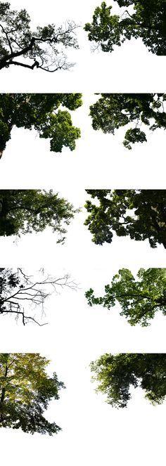2D Plants Branch 2 in PSD Format