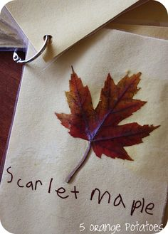 leaf identification cards- Leaf Unit
