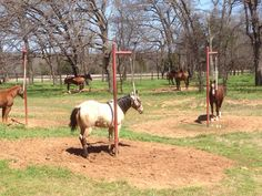 Patience pole. Great for colts. Great for all horses.