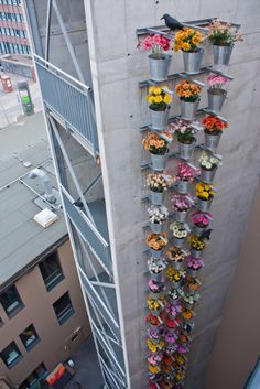 flowers in the industrial surrounding