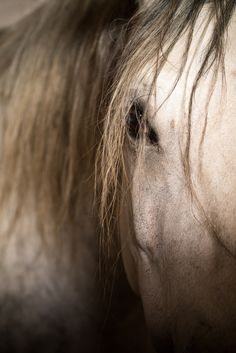 The old mare. Beautiful and gentile, time has not changed her.