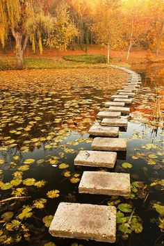 Bricks, Fall, efterår, photograph, water, peaceful, wood, forrest, bridge, panorama, view