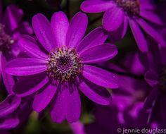 20140321.flower.3099.jpg