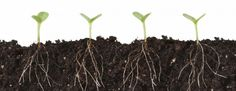 Soil tonics aren't fertilizers, but additives that help your soil and plants in some way. Seaweed or fish emulsion, weed tea, manure tea, compost tea and worm liquid all add vital nutrients to your. Planta Cannabis, Cannabis Plant, Weed Tea, Self Watering Containers, Compost Tea, Greenhouse Growing, Growth Hacking, Cannabis Growing, Planting Seeds