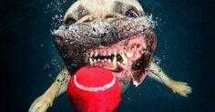 Serie: Hunde unter Wasser.