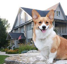 Baileys Harbor Hotel Dog Friendly Lodging Beachfront Inn Door County Wisconsin Travel Pinterest And