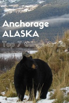 Adoration 4 Adventure's top 7 things to do in and around Anchorage, Alaska, U.S.A.    Read on for places to visit spectacular glaciers, go hiking with gorgeous views, spot brown bears and for tips on viewing the Northern Lights.