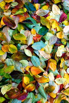 This is just leaves of Autumn but it gives me an idea that I could collect beautiful Maple leaves and using rich hued food coloring or natural dyes I could create decor from them. Color themed decor....