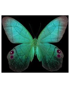 #Butterfly | #Butterflies | #Moths