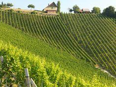 """Die Einzellage """"Hochsulz"""" des Weinguts SKOFF ORIGINAL Vineyard, The Originals, Outdoor, Kettle, Boden, Outdoors, Vine Yard, Vineyard Vines, Outdoor Games"""