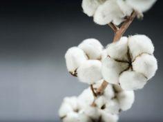 Cotton – Denim Help