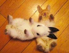 Bunnies!!!!!