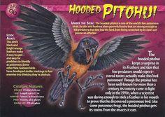 Horned Lizard, Wild Creatures, Strange Creatures, Monster Book Of Monsters, Flying Insects, Extinct Animals, Animal Species, Animal Cards, Birds Of Prey